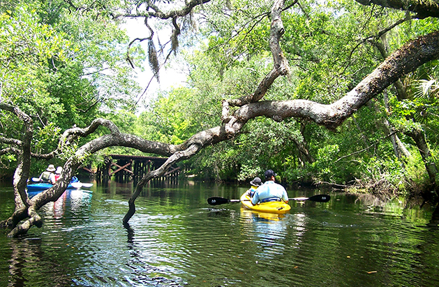 amelia island kayak excursions florida