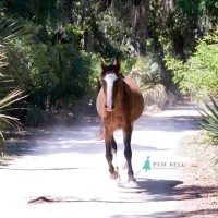 history of cumberland island georgia featured