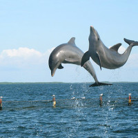 the dolphins of amelia island florida tours
