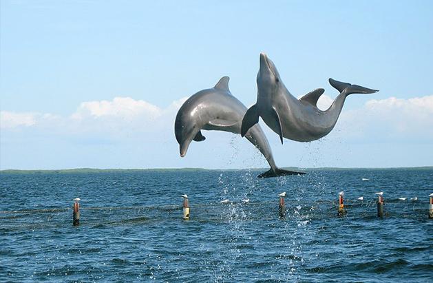 the dolphins of amelia island florida tours