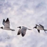 birds of amelia island florida