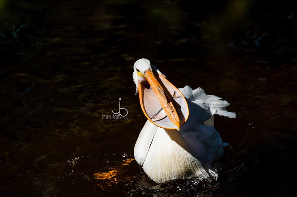 birds of amelia island